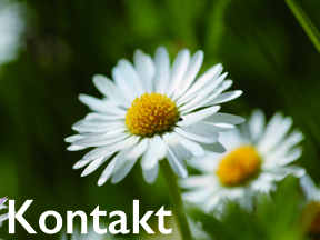 tl_files/magicflora/bilder/Startseite/kontakt288_caption.jpg