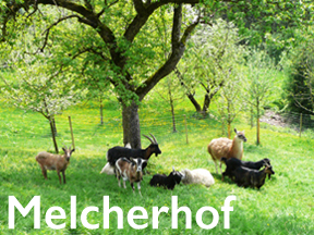 tl_files/magicflora/bilder/Startseite/melcherhof288_caption.jpg